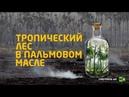 RTД на Русском (Тропический лес в пальмовом масле)