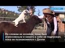 Пес катается верхом на пони