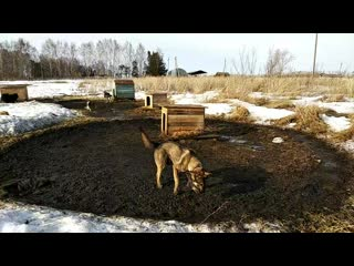 приют для собак остро нуждается в помощи кормами и препаратами от паразитов внутренних и внешних, начинается сезон клещей