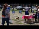 Региональная выставка собак ранга САС КЧФ РФСС г Нижний Новгород щенки померанцы