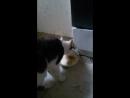 котик смешно