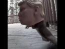 В Штатах видео с беличьими кормушками набрало тысячи просмотров