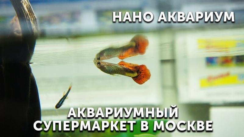Нано аквариум в московском супермаркете EXOMENU