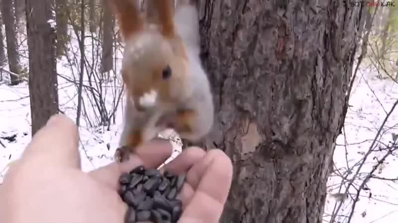 Решил белку покормить, накормил пол леса