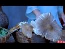 Ли ЦзыЦи - ДЕВУШКА С ХАРАКТЕРОМ! Грибы (лат. Fungi) ''ЦзюньЛэй''. Первые грибы ''ЧуньГу'' (весенний гриб). Пластинчатые грибы ''