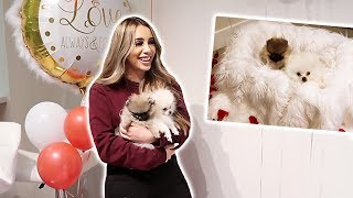 SURPRISING MY GIRLFRIEND WITH PUPPIES FOR HER BIRTHDAY! **EMOTIONAL**