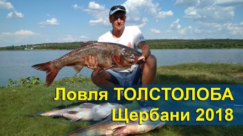 Ловля ТОЛСТОЛОБА | Щербани (Подлесное) 2018 | Удачная рыбалка