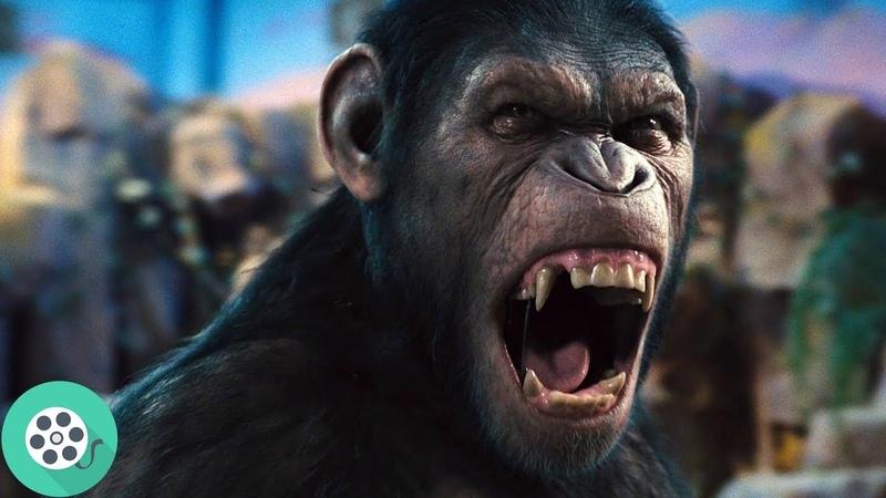 Цезарь научился говорить. Восстание планеты обезьян (2011) год.