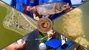 МЕГА ВЫПУСК ПО ЛОВЛЕ ТОЛСТОЛОБИКОВ Тесты технопланктона Обзор снастей Турнир Исаевские озера
