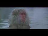 Трейлер к клипу Забей (тема к документальному фильму Барака)