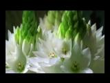 Back to Godhead Kirtan Symphony (Art Video)