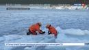 Новости на Россия 24 • Камчатские спасатели помогли выбросившейся из воды нерпе