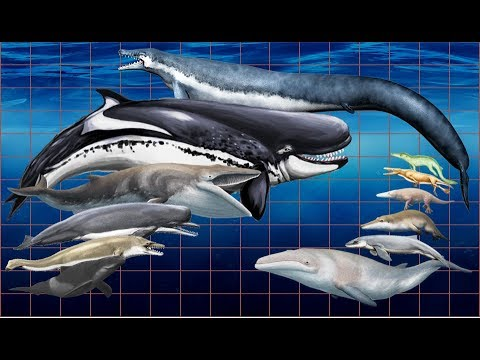 Extinct whales size comparison | extinct cetaceans