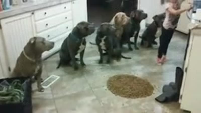 Маленькая девочка стоит посреди кухни и инструктирует собак