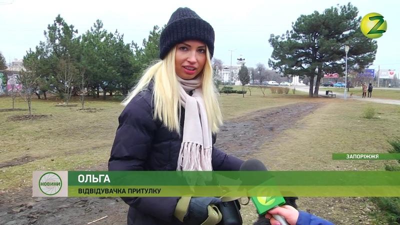 Новини Z - У Запоріжжі шукають друзів для прогулянки - 11.02.2019
