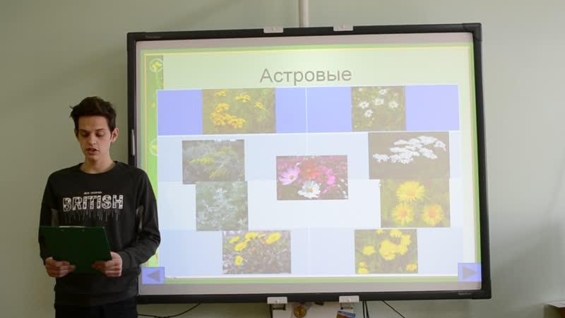 Электронный справочник-определитель рудеральных растений_Асино_Лёвин