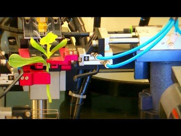 Despre un robot pentru altoirea plantelor legumicole, În grădina Danei, pe TVR1