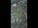Вольт и лягушка