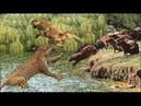 ذكاء جاكوار في البحث عن الصيد الحيوان ال 157