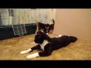 Мама кошка и котята. Передержка.