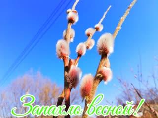 Запахло весной! Автор фото - Владимир Сергеев.