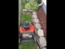 My favorite part when mowing the lawn