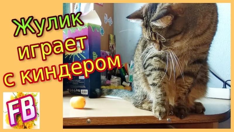 FB Кот Жулик играет с киндером Кот сбрасывает со стола киндер