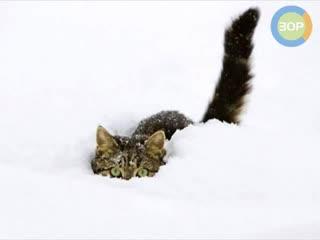 Утром кот принес на лапах снег 2   in the morning, the cat brought snow to his feet 2
