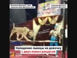 Нападение львицы на девочку с двух новых ракурсов 28 10 18 село Успенское (Армавир) Краснодарский край