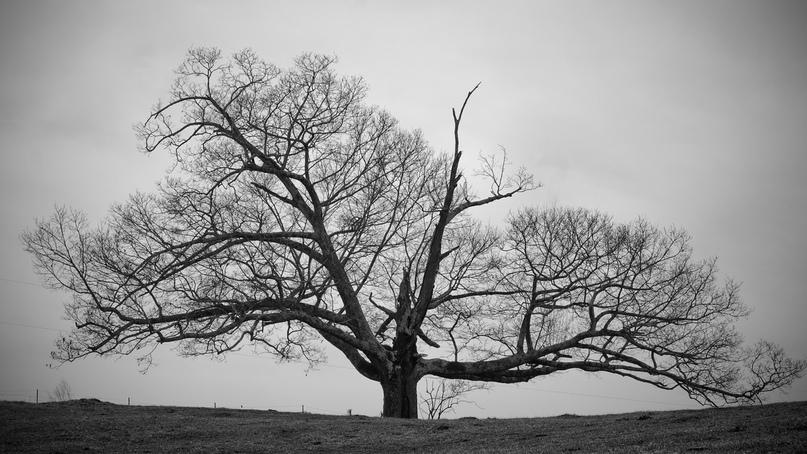 Черное Дерево |