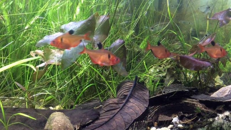 Pantanal 'Communitope' Aquarium