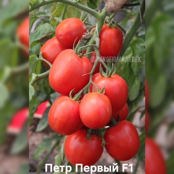 ПОДБИРАЕМ СОРТА ТОМАТА ДЛЯ ТЕПЛИЦЫ .У вас есть теплицаВы счастливый человек, ведь перед вами масса возможностей по выбору сортов томата. Вы можете выращивать как низкорослые томаты, так и