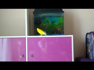 Пекпек и Риби