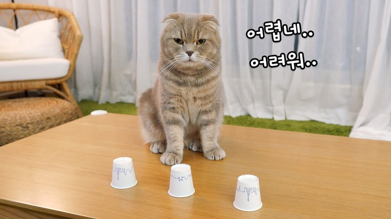 고양이와 야바위 게임을 해봤다!