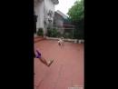 Очень крутой пёс демонстрирует свои навыки отражения мяча в воротах.