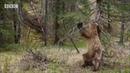 Bear Harlem Shake