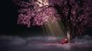 Sakura Drop Animated Wallpaper