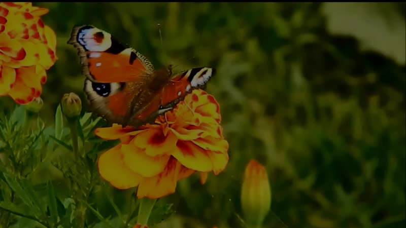 Бабочки и музыка для души.
