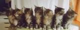 Metal kitts (4x)