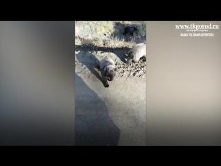 Три медвежонка вышли на дорогу к водителям-дальнобойщикам. Сентябрь 2018. Усть-Илимск