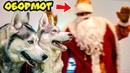 ДЕД МОРОЗ - ОБОРМОТ Хаски Бандит feat Mister Booble Премьера клипа. Поющие собаки