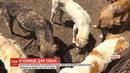 На Одещині волонтери врятували три десятки собак яких тримали у спеку на подвір'ї без їжі та води