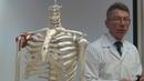 Анатомия позвоночного столба Строение позвонков