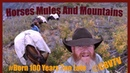 Mule and Horse Packing In the wilderness I can't believe its been that long