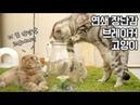 연쇄 장난감 브레이커 고양이 소울