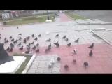 Криминальная группировка голубей. Голуби вышли на несанкционированный митинг