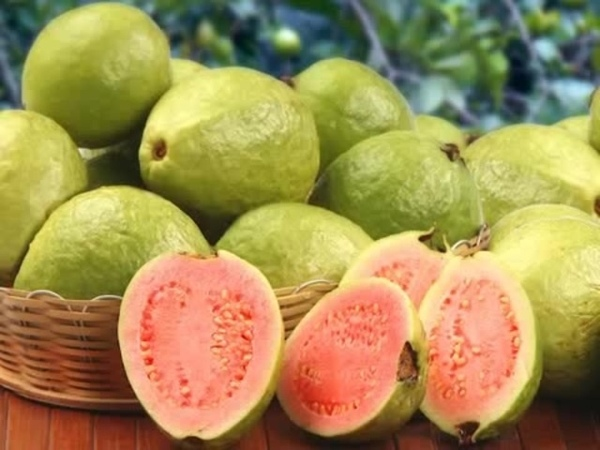 Guava Plus Serum