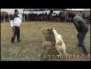 16 международный турнир г Актобе 2014 г 8 ролик