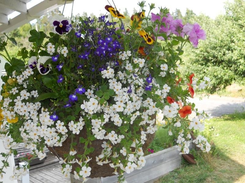 Подвесное кашпо с цветами, фото и мастер-класс