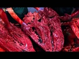 National Geographic T Rex Autopsy - Full Documentary -Dinosaurs Discovery Documentary